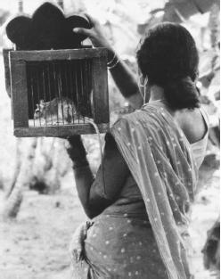 elippathayam movie